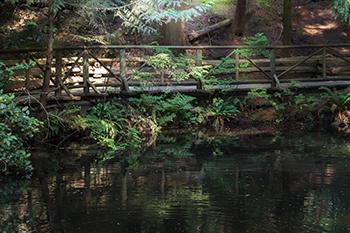 wooden boardwalk around a pond in the forest