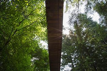 looking up at the Tree Tops Adventure suspension bridge