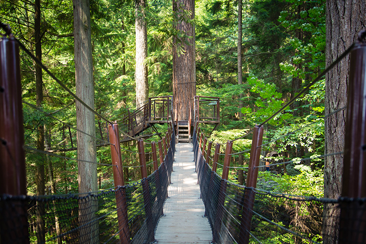 Capilano Tree Tops Adventure
