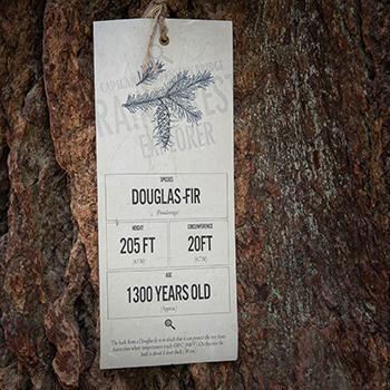 Tag on a Douglas Fir