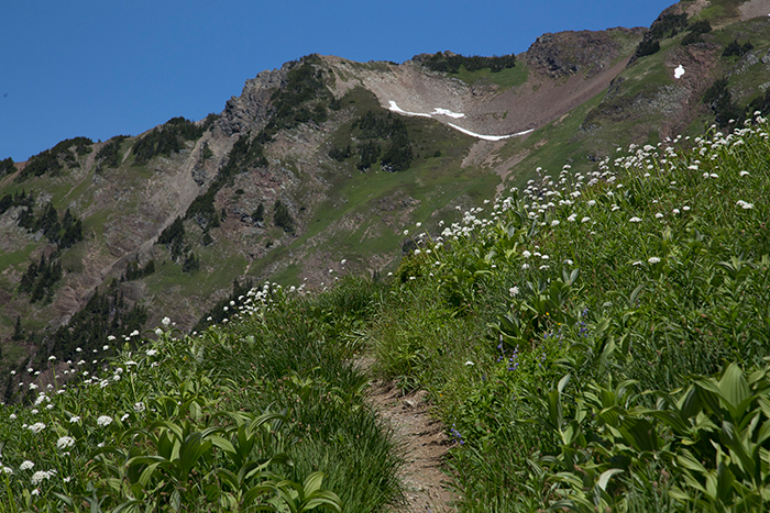 steep trail with wild flowers on each side