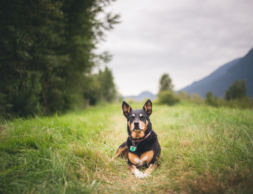 20 Life Lessons My Dog Taught Me