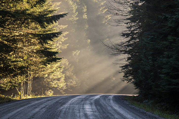 sunrays beam through the trees on a wet dirt road
