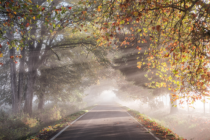 Bright sunshine beams on a rural road in the Autumn