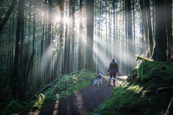girl walking her dog in the forest with bright sunbeams